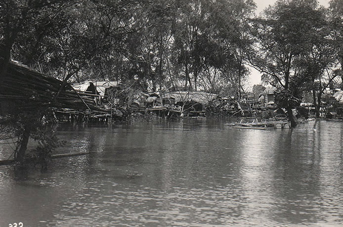 Homes in the trees after the flood